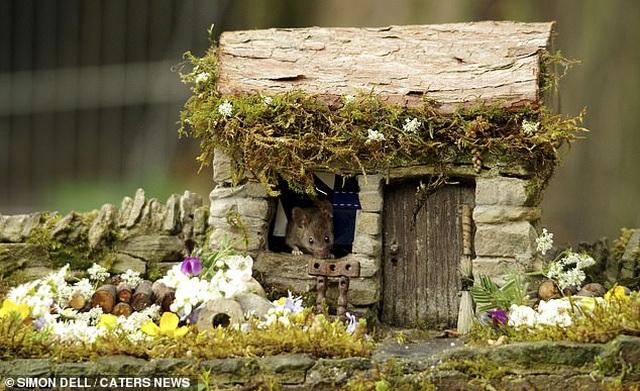 """Chiêm ngưỡng bộ ảnh gây sốt chụp """"ngôi làng của những chú chuột"""" - 11"""