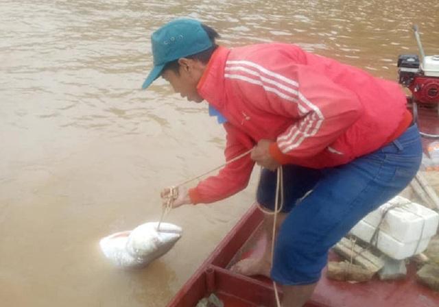 """Theo chân ngư phủ săn """"thủy quái"""" sông Đà - 1"""