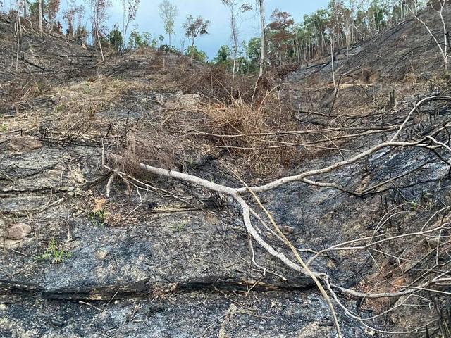 Truy tìm đối tượng tàn phá hơn 3,5ha rừng - 2