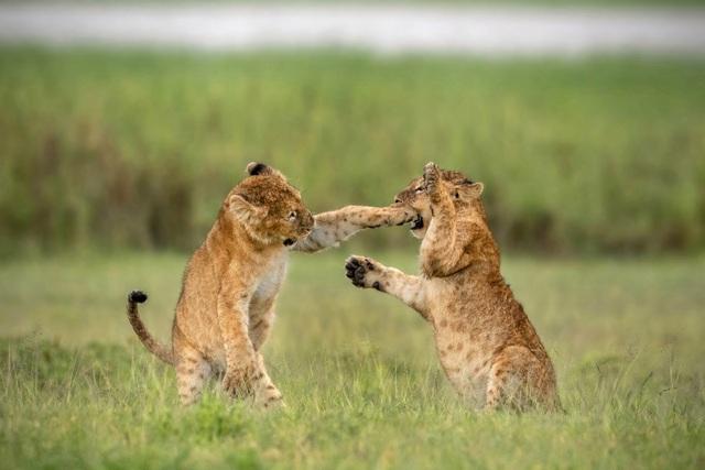 Những khoảnh khắc hài hước đáng yêu của động vật hoang dã - 1