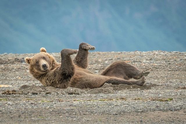 Những khoảnh khắc hài hước đáng yêu của động vật hoang dã - 3