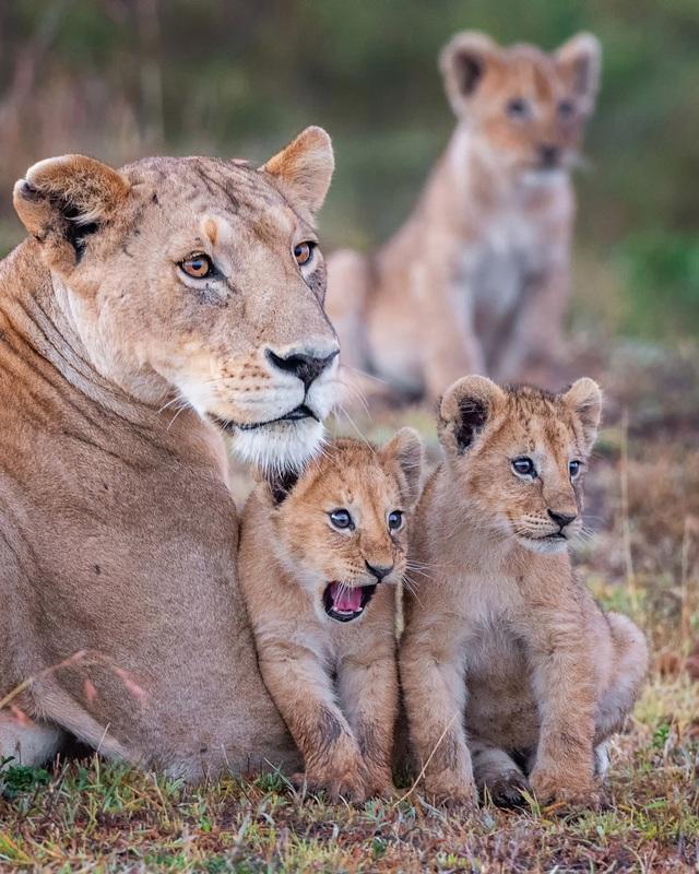 Những khoảnh khắc hài hước đáng yêu của động vật hoang dã - 4