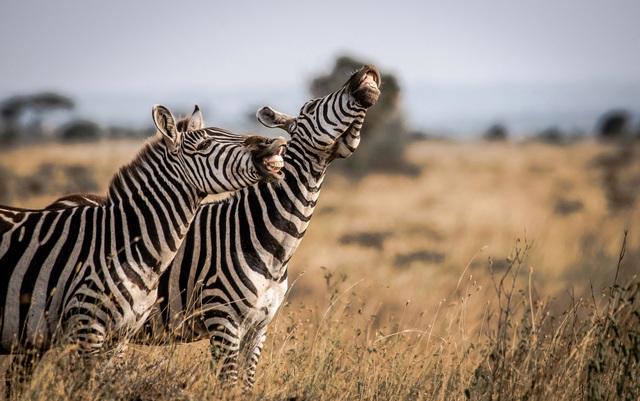 Những khoảnh khắc hài hước đáng yêu của động vật hoang dã - 5