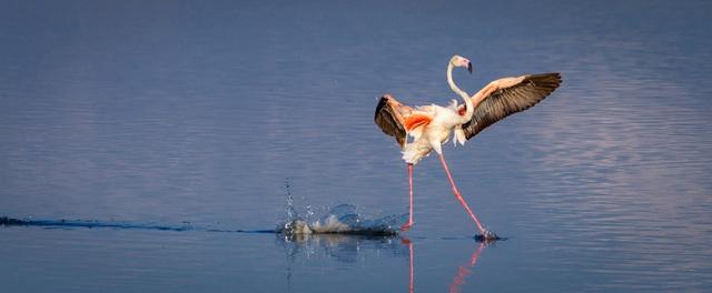 Những khoảnh khắc hài hước đáng yêu của động vật hoang dã - 8