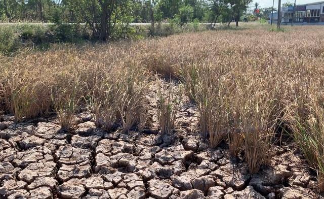 Mỗi năm ĐBSCL đón 350 tỷ m3 nước nhưng vẫn hạn hán là vô lý! - 2