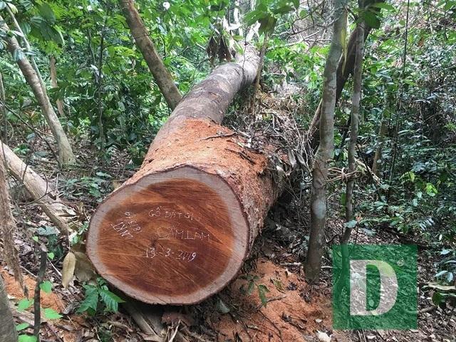 Lập đoàn liên ngành kiểm tra vụ phá rừng Trường Sơn - 2