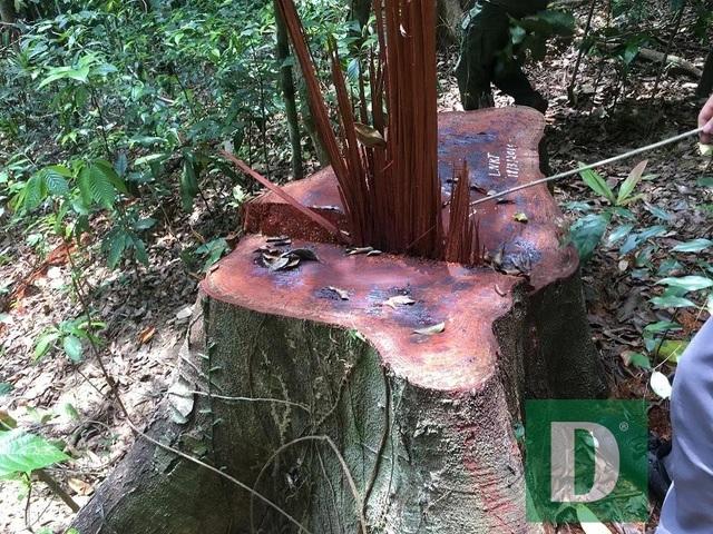Lập đoàn liên ngành kiểm tra vụ phá rừng Trường Sơn - 1