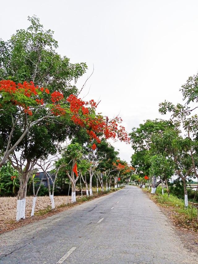 Rực sắc hoa phượng vĩ đường về Đền thờ Bác Hồ những ngày tháng 5 - 1