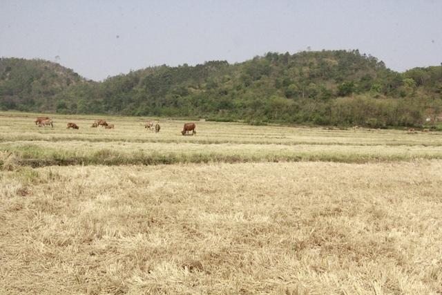 Hạn hán khốc liệt tại Đắk Lắk - 1