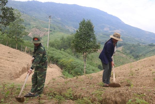 Trồng cây dược liệu ở huyện nghèo Kon Plông - 2