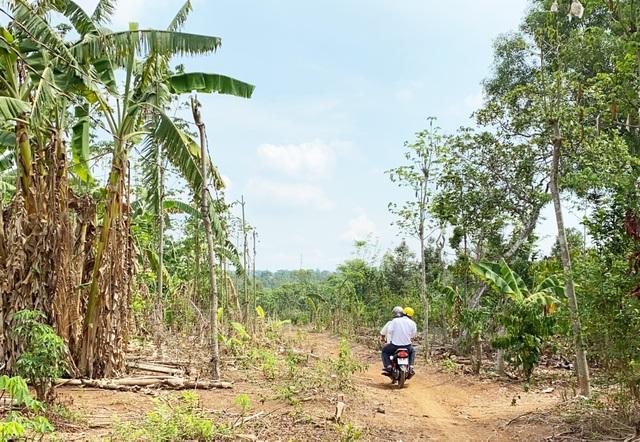 Vượt rừng, đội nắng mang tiền đến người dân gặp khó khăn vì dịch Covid-19 - 1