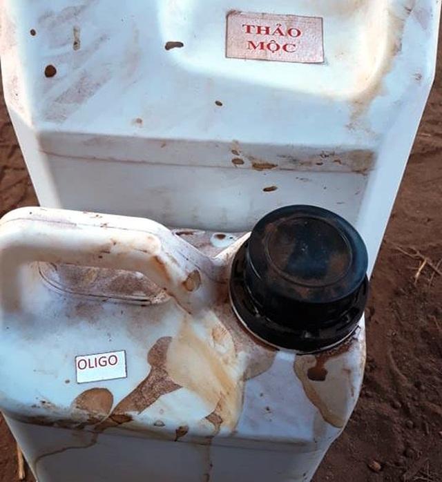 Dân tố hàng ngàn cây sầu riêng giống bị chết khô sau khi bón phân - 3