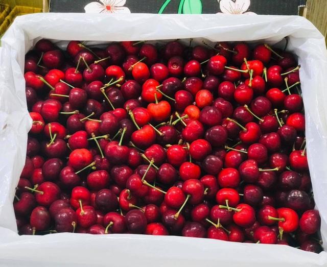 Hết thời giá rẻ, nhà giàu Việt ăn cherry Mỹ 1 triệu đồng/kg - 1