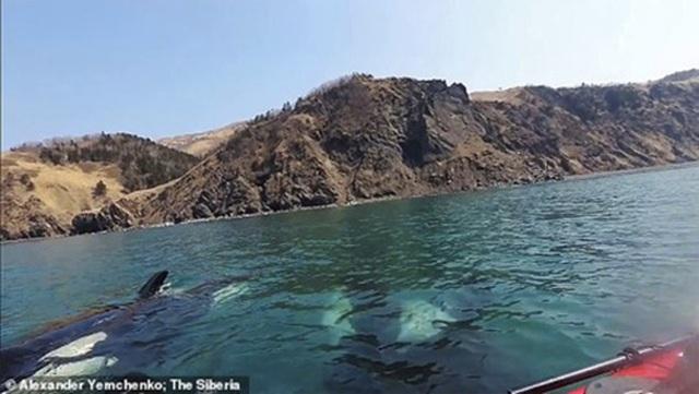 Video: Khoảnh khắc cá voi sát thủ bao vây thuyền Kayak - 4