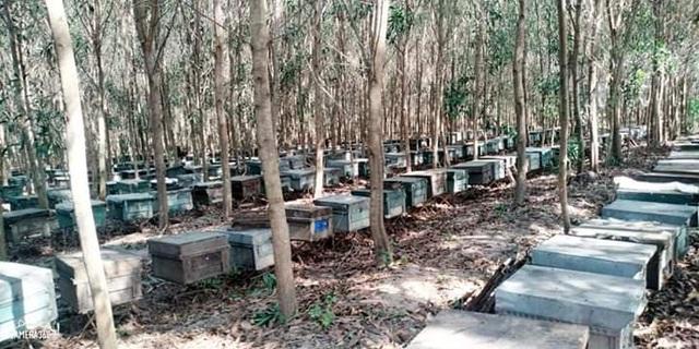 Hơn 200 tổ ong bất ngờ chết đồng loạt - 2