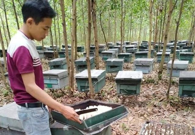Hơn 200 tổ ong bất ngờ chết đồng loạt - 1