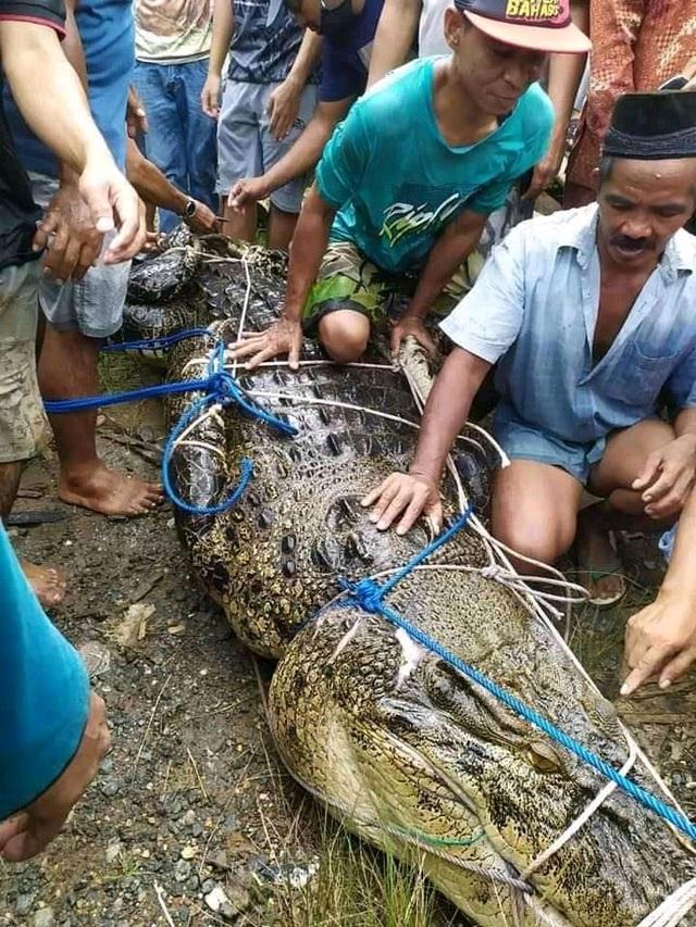 Bắt cá sấu không… răng dìm chết thiếu nữ 17 tuổi - 1