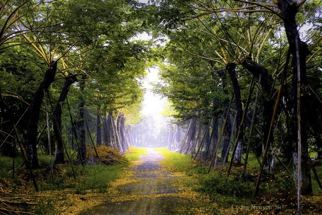 Cánh đồng hoa đẹp như cổ tích trong thành phố triệu cây xanh gần Hà Nội - 1