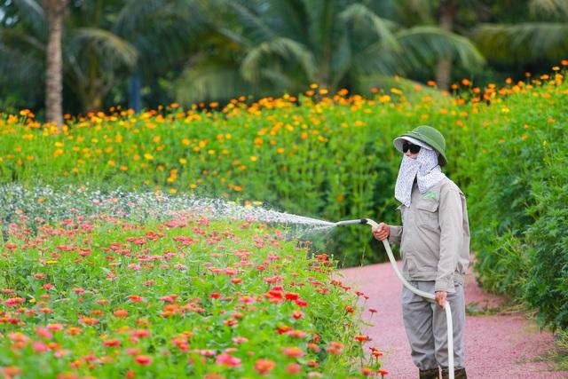 Cánh đồng hoa đẹp như cổ tích trong thành phố triệu cây xanh gần Hà Nội - 6