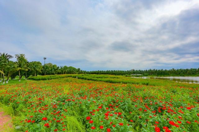 Cánh đồng hoa đẹp như cổ tích trong thành phố triệu cây xanh gần Hà Nội - 7