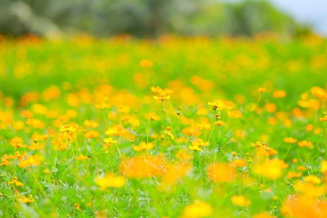 Cánh đồng hoa đẹp như cổ tích trong thành phố triệu cây xanh gần Hà Nội - 10
