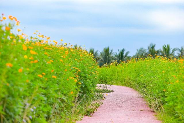 Cánh đồng hoa đẹp như cổ tích trong thành phố triệu cây xanh gần Hà Nội - 9