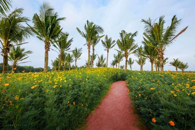 Cánh đồng hoa đẹp như cổ tích trong thành phố triệu cây xanh gần Hà Nội - 11