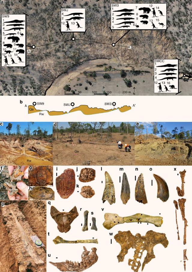 Khí hậu cực đoan làm tuyệt chủng hệ động vật khổng lồ ở Úc và New Guinea - 2