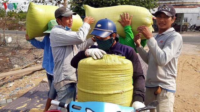 """Nghề """"hot"""" ở Cà Mau: Tải lúa thuê kiếm tiền triệu mỗi ngày - 11"""