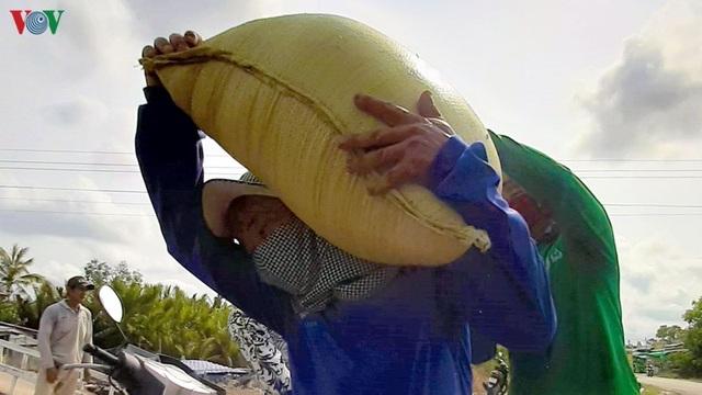 """Nghề """"hot"""" ở Cà Mau: Tải lúa thuê kiếm tiền triệu mỗi ngày - 14"""