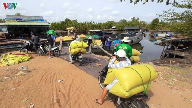 """Nghề """"hot"""" ở Cà Mau: Tải lúa thuê kiếm tiền triệu mỗi ngày - 7"""