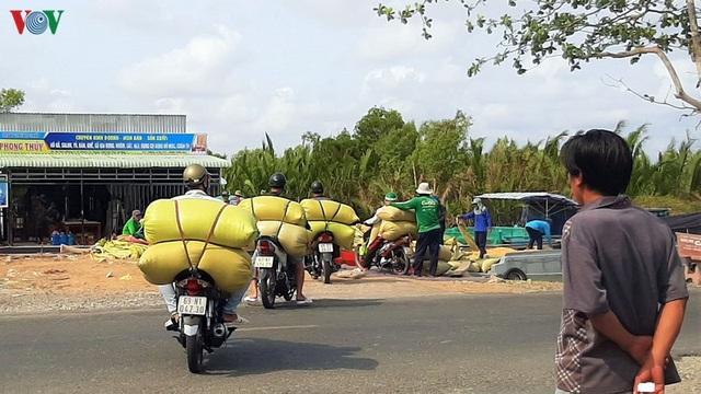 """Nghề """"hot"""" ở Cà Mau: Tải lúa thuê kiếm tiền triệu mỗi ngày - 8"""