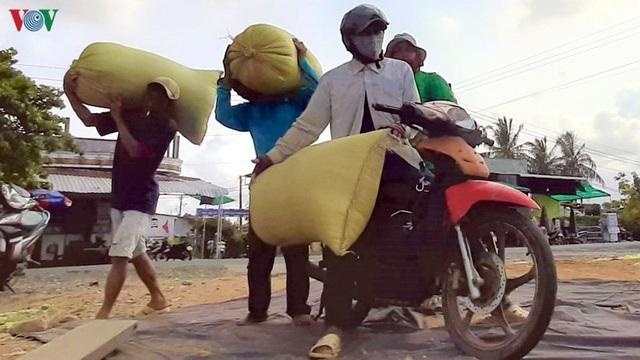 """Nghề """"hot"""" ở Cà Mau: Tải lúa thuê kiếm tiền triệu mỗi ngày - 9"""
