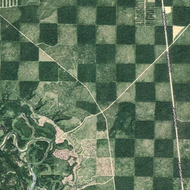 Độc đáo cánh rừng có hình bàn cờ - 1