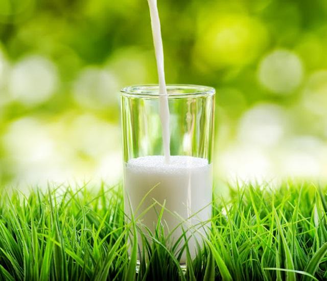 """Sữa bò """"hữu cơ kép"""" - 1"""