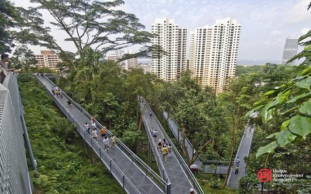 """Singapore """"làm nhà trong rừng"""", người dân ra đường như vào công viên - 2"""