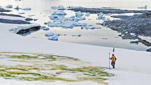 Biến đổi khí hậu biến tuyết Nam Cực thành màu xanh - 1
