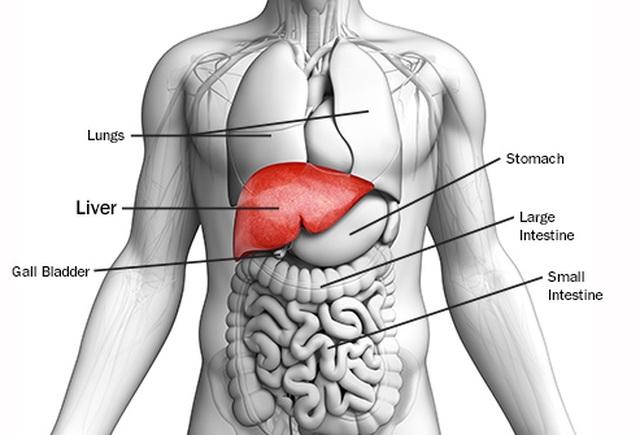 Điều trị ung thư gan bằng cách nhắm vào...tế bào khỏe mạnh - 1