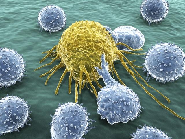 """Phát hiện """"công tắc"""" biến thuốc thông thường thành vũ khí chống ung thư - 1"""