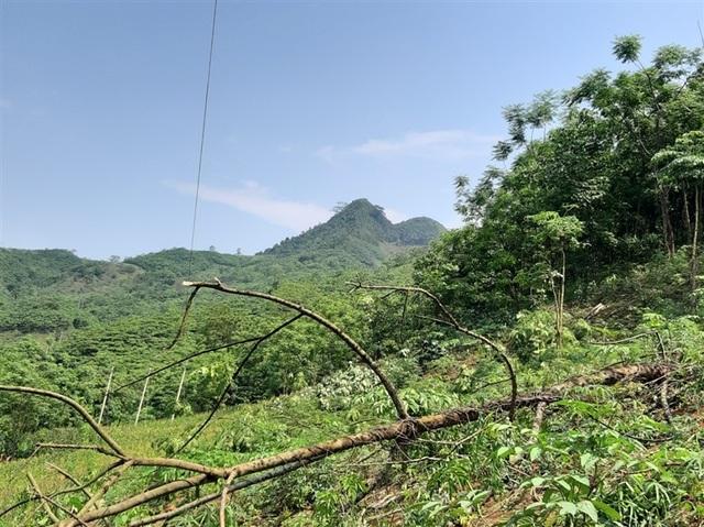 Bị phạt 10 triệu đồng vì cưa cây làm đứt đường dây điện - 1
