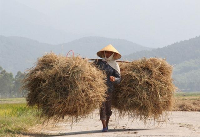 Hà Tĩnh: Dùng rơm làm áo cho hành, kiếm hàng chục triệu đồng - 3