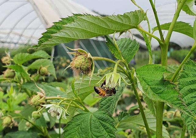 Loài ong có biết đếm không? - 1