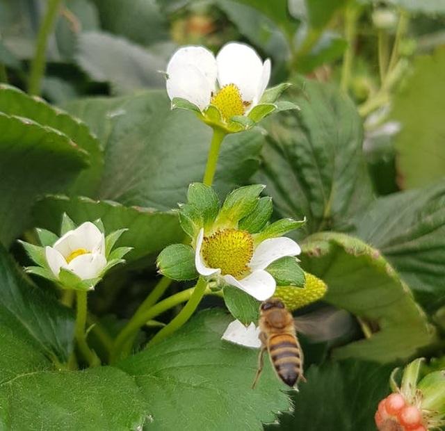 Loài ong có biết đếm không? - 4