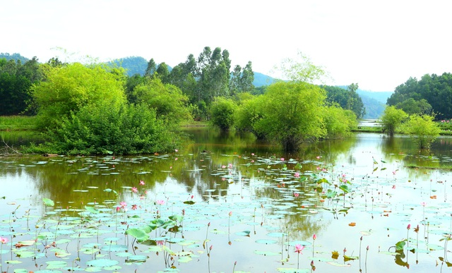 Mãn nhãn với thung lũng sen hồng tuyệt đẹp giữa lòng xứ Quảng - 3