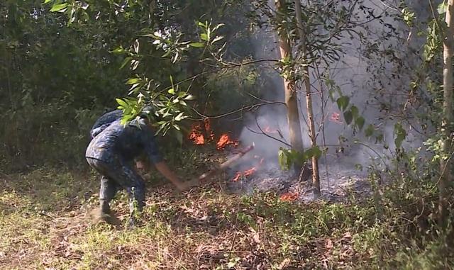 Đà Nẵng: Cháy rừng keo gần sân bay - 3