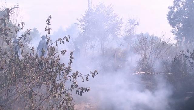 Đà Nẵng: Cháy rừng keo gần sân bay - 1