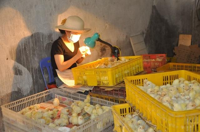 Nghề lạ mỗi ngày kiếm cả triệu đồng nhưng luôn khát người làm ở Hà Nội - 1