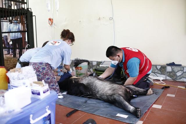 Cứu hộ thành công 2 cá thể gấu ngựa bị nuôi nhốt 20 năm - 1