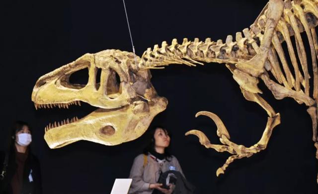 """Tìm thấy hóa thạch cực hiếm của """"siêu khủng long"""" khổng lồ - 1"""