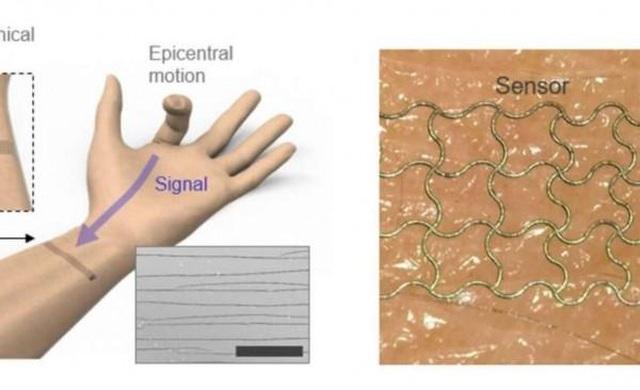 Cảm biến da điện tử có thể nắm bắt các chuyển động phức tạp của con người - 1